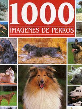 1000 IMAGENES DE PERROS